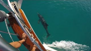 Salty Abandon #30 - Sailing Bahamas w/Dolphin & Drone - Cat Cay to Chub